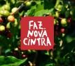 Logo Fazenda Nova Cintra