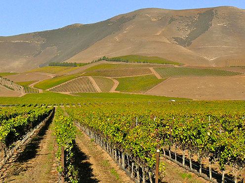 Nagy Wines / cnagy wines