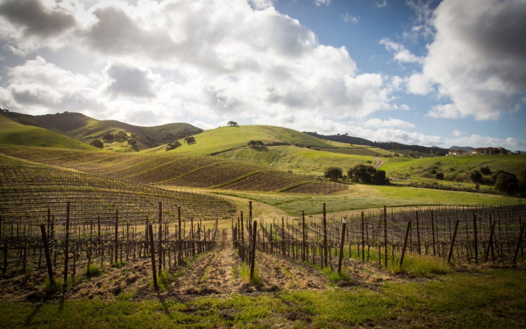 What is an AVA and How Does it Impact Wine?