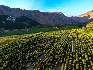 Rancho Guejito Vineyard