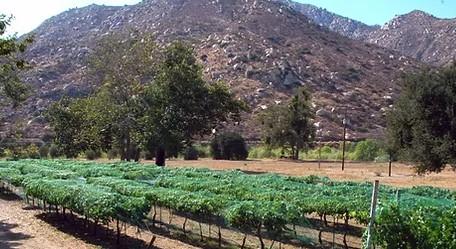 Wyatt Oaks Winery