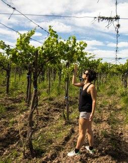 high-vines