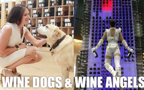 WIneDogsWIneAgels_Feature