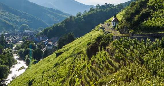 wine tours in Alsace - Credits Meyer and ADT Alsace