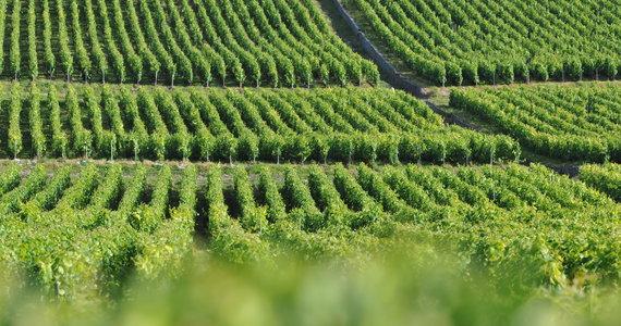 Champagne tour Hautvillers- Credits Richard Newton