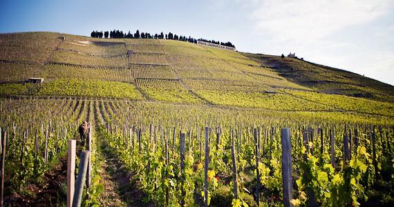 Rhone wine tour