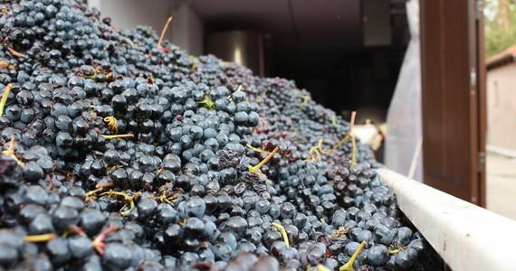 Piedmont wines- credits Cantina Marsaglia