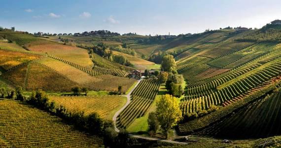 Piedmont Wine Tour - Credits Ca del Baio