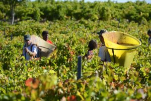 Harvest tasting and tours