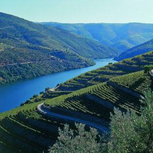 Wine Tasting Team Building- Credits Porto Convention and Visitos Bureau and Fernando Peneiras
