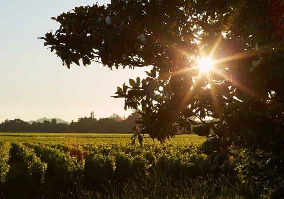 Saint-Emilion Wine tour - credit Grand Barrail