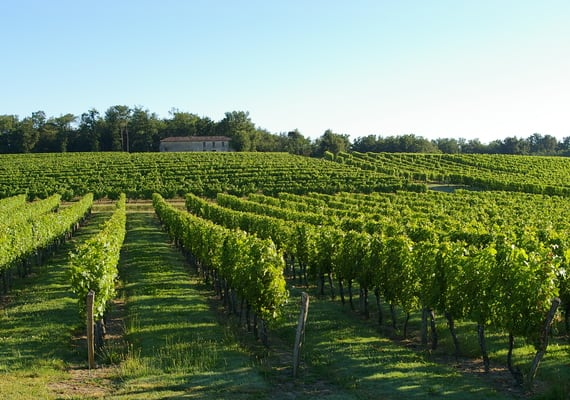 Saint-Emilion wine tour credit CDT Gironde (2)
