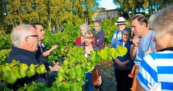 Cassis wine tour - VENDANGE00038