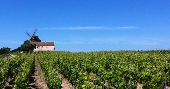 Vineyards 2 AR Champagne weekends
