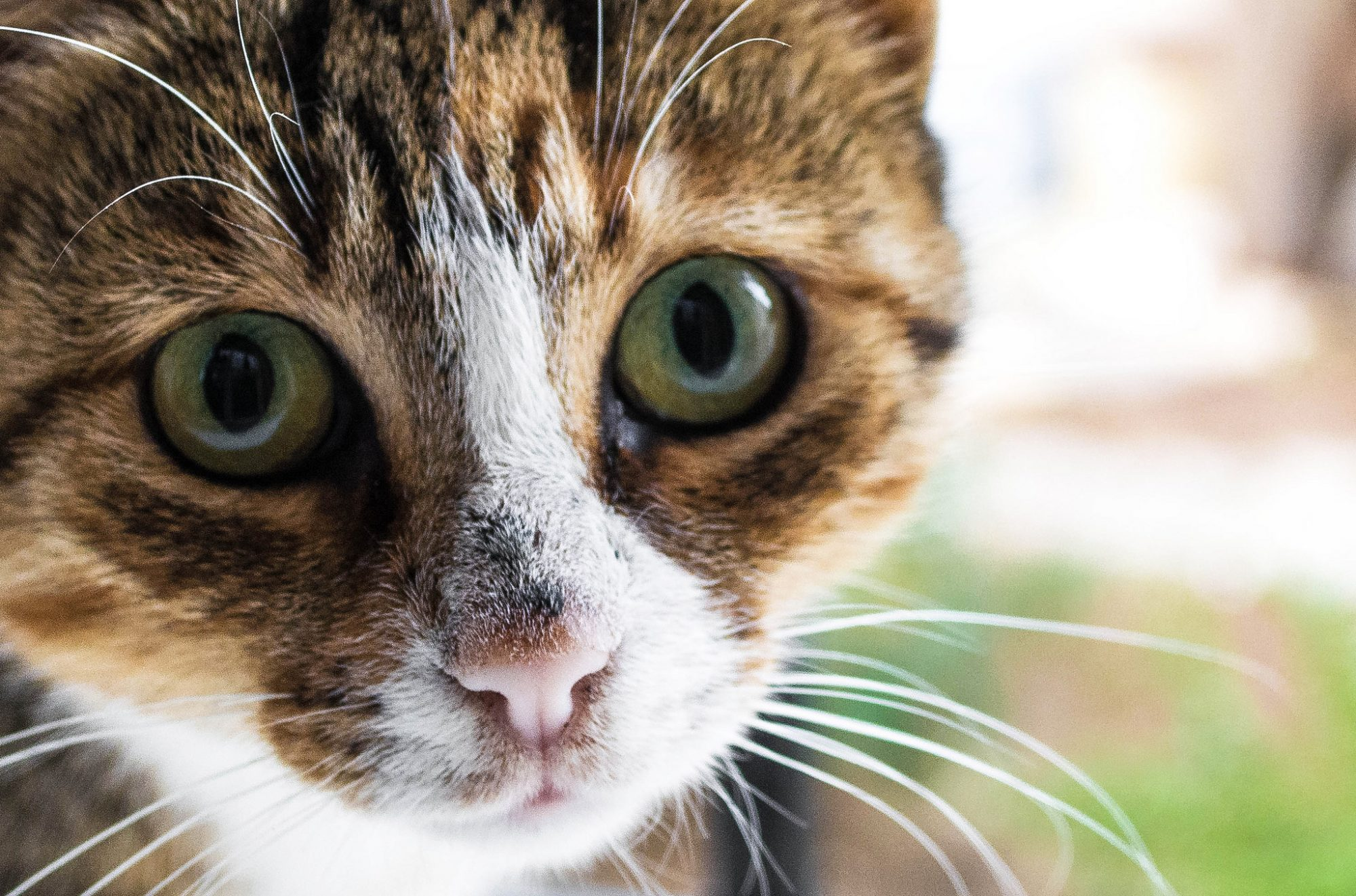 Iceland Opens a Cat Hotel