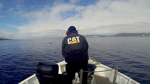 Aboard A Whaling Vessel