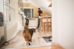 The cat would probably prefer for his owner to spend more time at home...