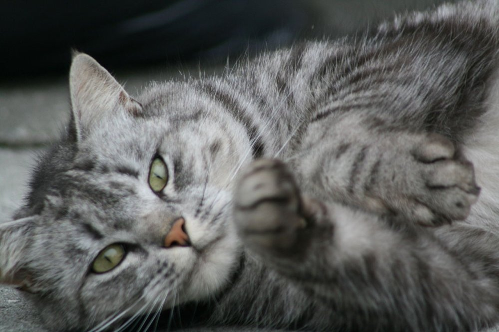 Norwegian Cat Stows Away In Shipping Container, Ends Up In Iceland