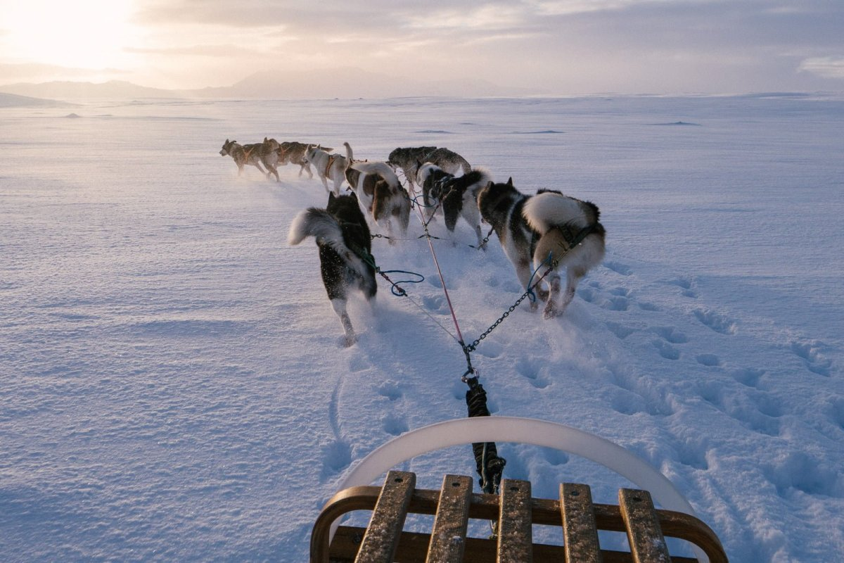 The Smooth White Sea: Dog Sledding In South Iceland