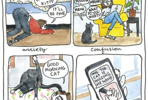 Comics: Iceland's Saucy History & The Joys Of Getting A Cat