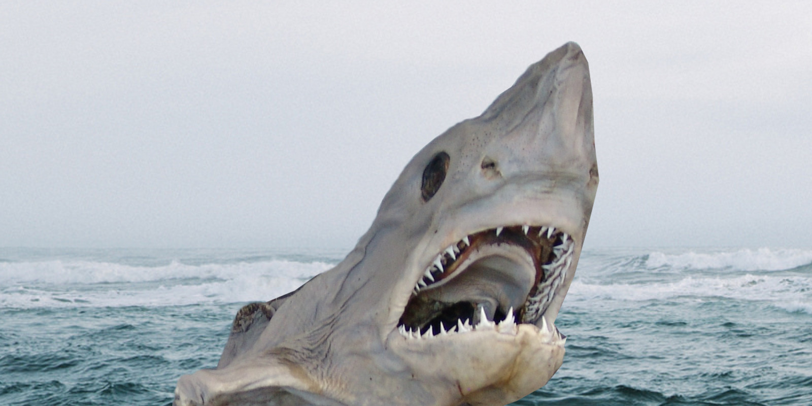 The Truth About Fermented Shark