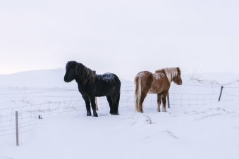 Chilling horses
