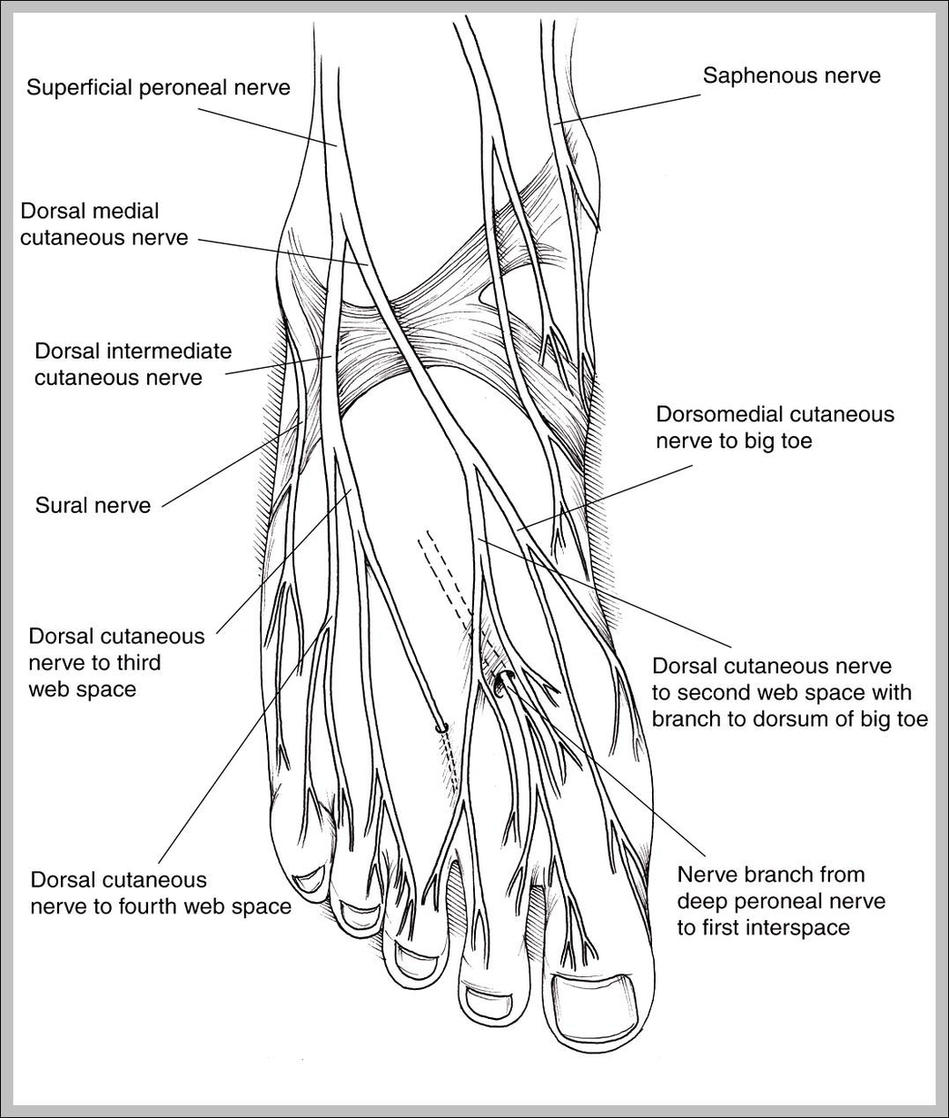 All The Human Body Systems