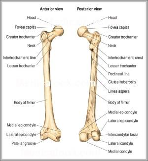 Anatomy | Graph Diagram | Page 36