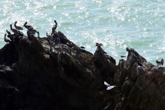 Mussel Rock Residents