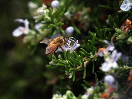 The Pollenator!