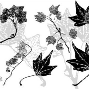 Download free Photoshop brushes Ivy leaves