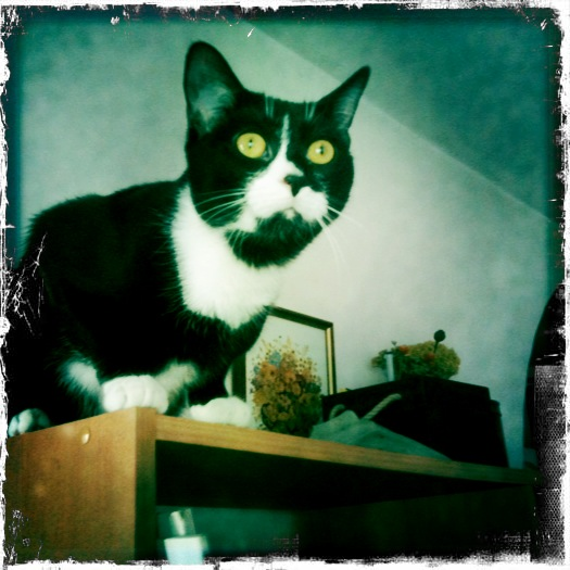 MP Alphons, The Cat
