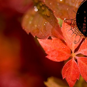 October 2011 Desktop Calendar Wallpaper