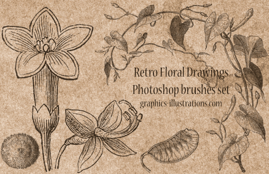 Free Photoshop Brushes: Retro Floral Drawings 2