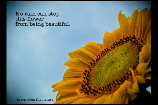 Image of motivational postcard, no rain can stop this flower from being beautiful