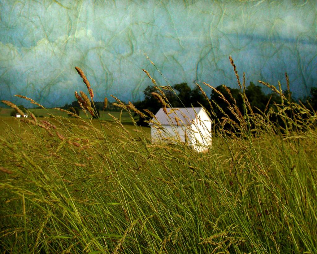 Timothy Grass by Katherine Dilworth, Photo Manipulation