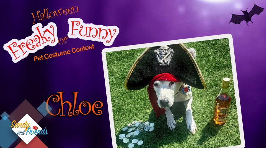 Chloe the Pirate Makes Television Debut