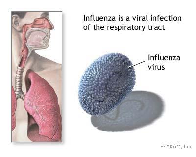 https://i2.wp.com/graphics8.nytimes.com/images/2007/08/01/health/adam/9470.jpg