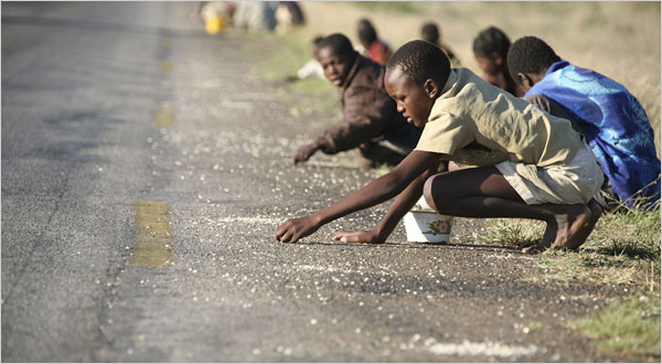 Zimbabwean children picked up corn that had spilled from a truck on a recent Sunday along a road south of the capital, Harare. Tsvangirayi Mukwazhi/Associated Press