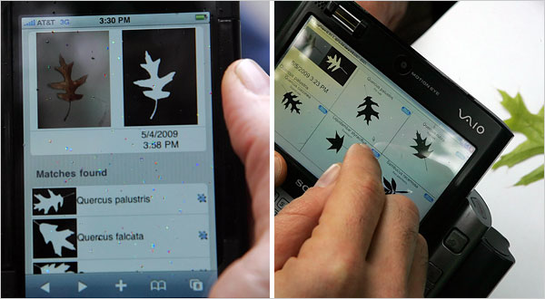 Digital Tree Guide