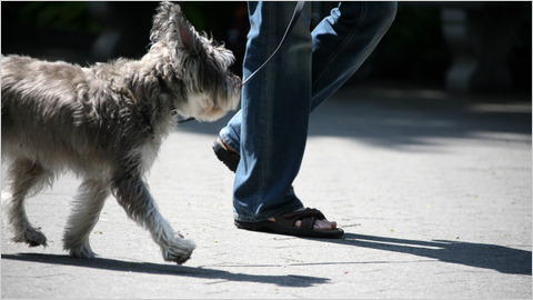 photo:Suzanne DeChillo/The New York Times  A dog will never try to talk you out of going for a walk.