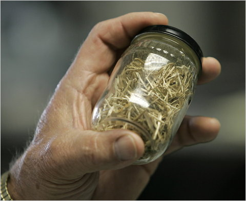 Switchgrass that is used to make biomass for electricity at a plant in Chillicothe, Iowa.