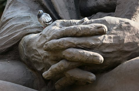 A pigeon sitting on a Mahatma Gandhi statue installed inside the Parliament premises in New Delhi. The winter session of Parliament began on Thursday.