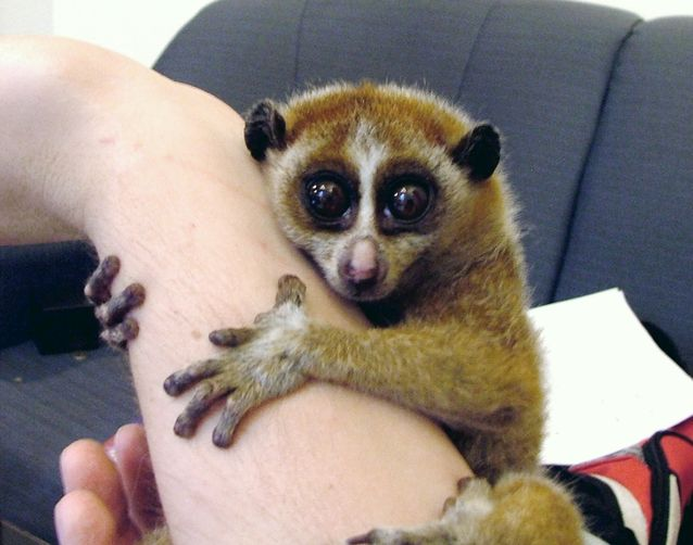 Animals You Want To Hug But Should NOT 2