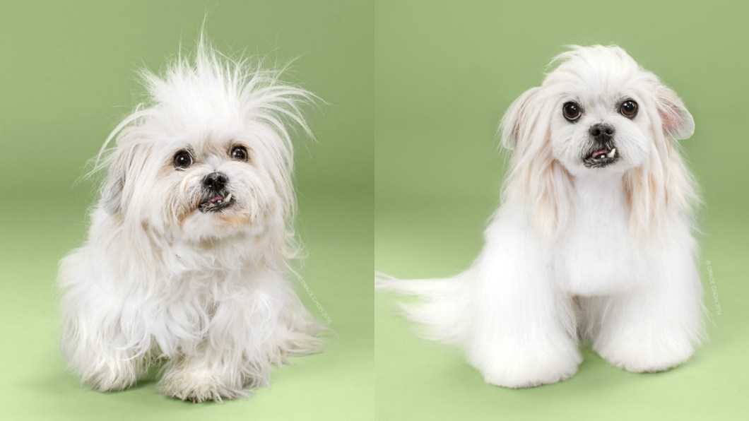 Doggies Before And After Their Haircut_005