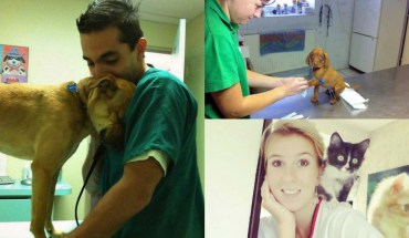 These 50 Pictures Will Make You Want To Work At An Animal Hospital