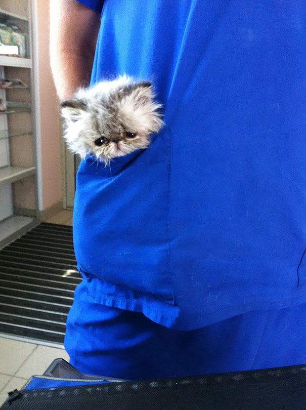 These Pictures Will Make You Want To Work At An Animal Hospital13
