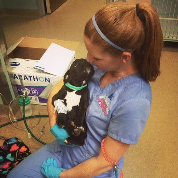 These Pictures Will Make You Want To Work At An Animal Hospital15