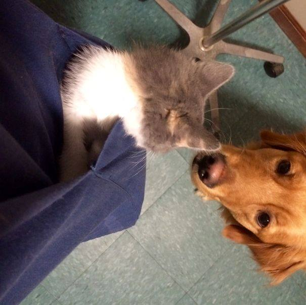 These Pictures Will Make You Want To Work At An Animal Hospital40