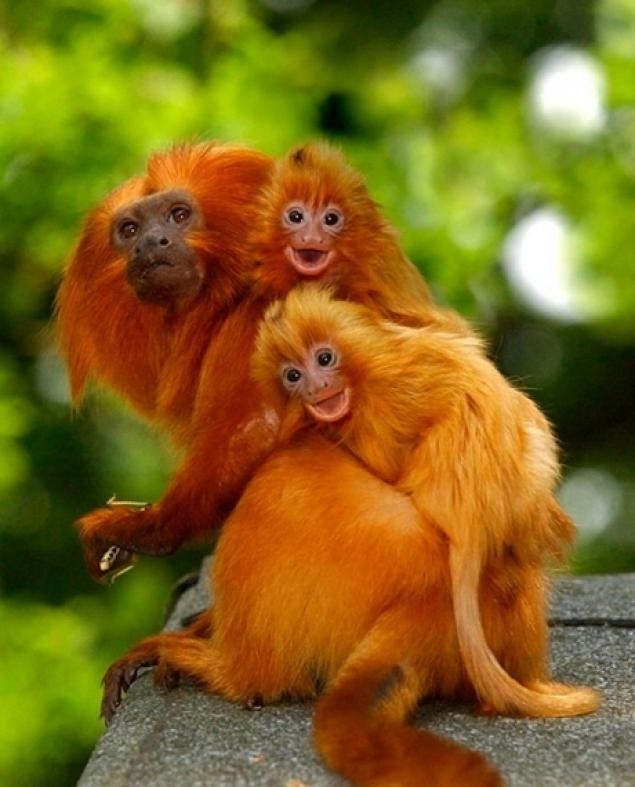 Animal Parents With Their Animal Babies_025